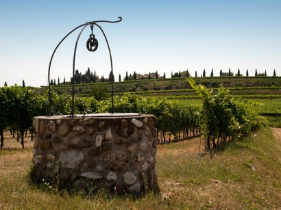 weddings-italian-vineyard.jpg